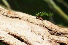 Nachtschicht bei den Blattschneide Ameisen im Darwineum (c) Frank Koebsch (1)