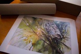 Posterdruck von der Aquarell - Ich seh Dich - einem Aquarell mit einer Waldohreule von Hanka Koebsch