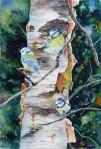 Beobachter (c) ein Aquarell mit Blaumeisen von Hanka Koebsch