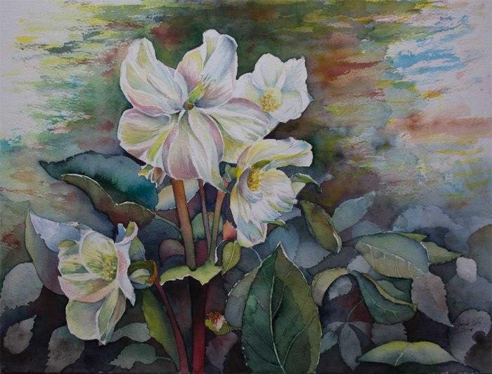 Christrosen - Farbspiele des Frühlings (c) Aquarell von Frank Koebsch
