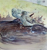 Poolparty (c) Ein Spatzenaquarell von Hanka Koebsch