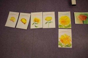 Welches Aquarellpapier eignet sich für die Chrysanthemen Aquarelle (c) Frank Koebsch (2)