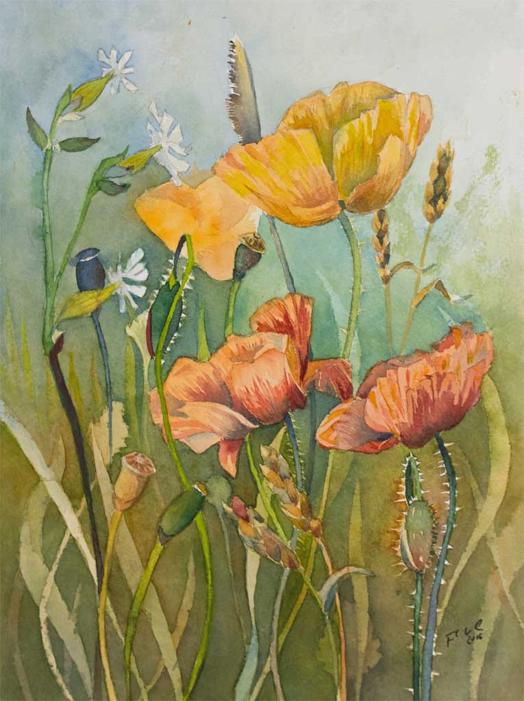 Sommerfeld (c) ein Mohn Aquarell von Frank Koebsch
