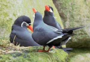 Aquarell Kurs im Rostocker Zoo in der Seevogel Volliere (c) Frank koebsch (1)