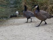 Aquarell Kurs im Rostocker Zoo in der Seevogel Volliere (c) Frank koebsch (2)