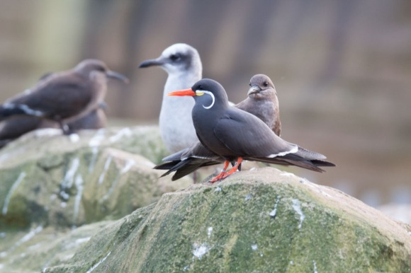 Aquarell Kurs im Rostocker Zoo in der Seevogel Volliere (c) Frank koebsch (3)