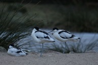 Aquarell Kurs im Rostocker Zoo in der Seevogel Volliere (c) Frank koebsch (4)