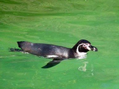 Aquarellkurs im Rostocker Zoo bei den Pinguine (c) Frank Koebsch (1)