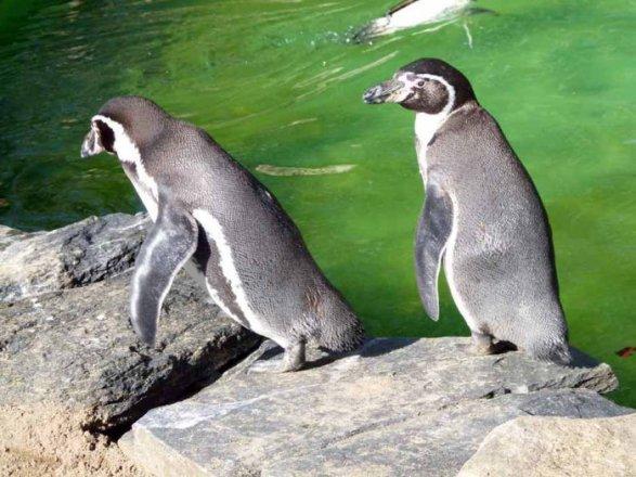 Aquarellkurs im Rostocker Zoo bei den Pinguine (c) Frank Koebsch (2)