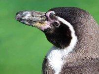 Malevent für Familien im Rostocker Zoo - Pinguine (c) Frank Koebsch (2)