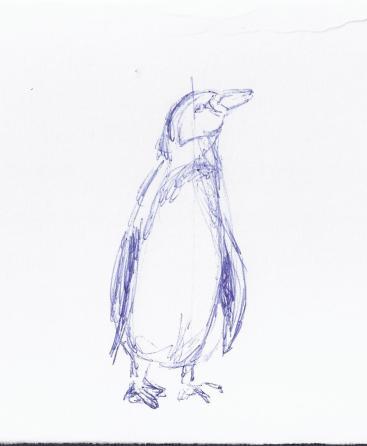 Skizze Pinguin frontal (c) Frank Koebsch