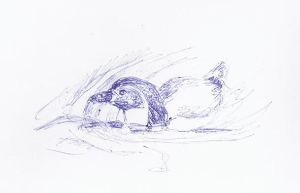 Skizze schwimmender Pinguin (c) Frank Koebsch