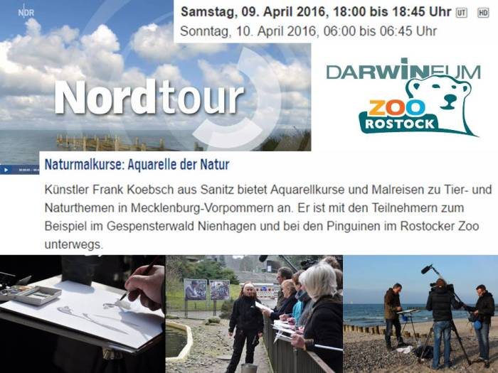 Die Nordtour des NDR berichtet über Naturmalkurse - Aquarelle der Natur von Frank Koebsch