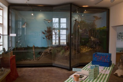 Ausstellungsraum in der Naturschutzstation Schwerin (c) Frank Koebsch