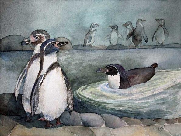 Humboldt Pinguine (c) Aquarell von Frank Koebsch