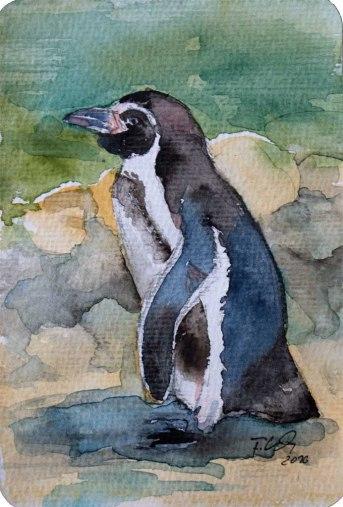 Pinguin (c) Miniatur in Aquarell von Frank Koebsch (2)