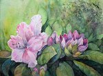 Rhododendronblüten (c) Aquarell von FRank Koebsch