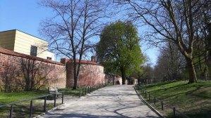 Rostocker Stadtmauer in den Wallanlagen (c) Frank Koebsch (1)