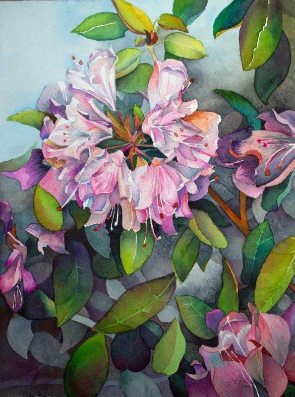 Blütenpracht des Rhododendrons (c) Aquarell von Frank Koebsch