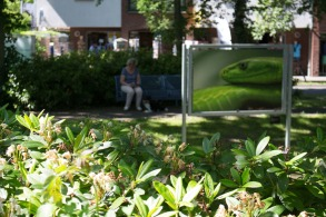 OpenAir Fotoschau auf dem Postplatz in Zingst (c) FRank Koebsch (2)