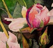 Detail aus dem Aquarell Rosenblüten – wunderbare aber vergängliche Schönheiten