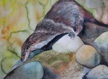 Auf Entdeckungstour (c) ein Fischotter in einem Aquarell von FRank Koebsch