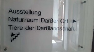 Ausstellung Tiere der Boddenlandschaft im Natureum Darßer Ort (c) FRank Koebsch