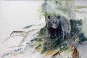 Grüße aus Kanada (c) ein Schwarzbär in einem Aquarell von Hanka Koebsch