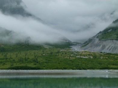 Grizzlys am Ufer der Glacier Bay (c) FRank Koebsch (1)