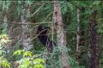 Schwarzbären (c) Max Fellner (10)