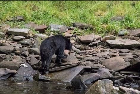 Schwarzbären (c) Max Fellner (6)