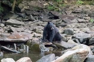 Schwarzbären (c) Max Fellner (8)