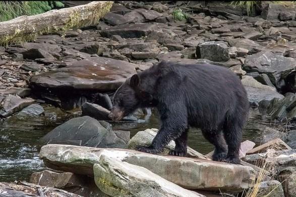 Schwarzbären (c) Max Fellner (9)