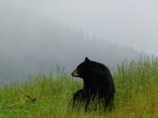 Schwärzbären (c) FRank Koebsch (1)