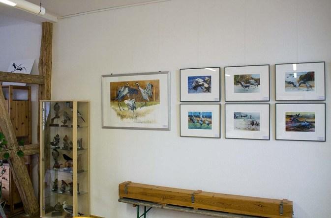 Ausstellung von Kranich Aquarelle in der Naturschutzstation Schwerin (c) Frank Koebsch (2)