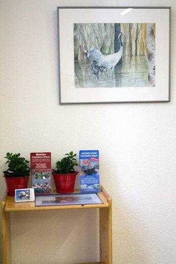 Ausstellung von Kranich Aquarelle in der Naturschutzstation Schwerin (c) Frank Koebsch (3)