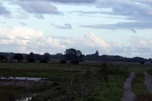 Boddenwiesen bei Ummanz (c) FRank Koebsch