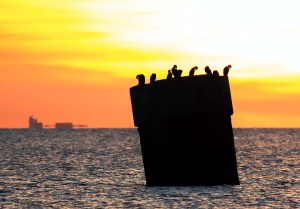 Kormorane beim Sonnenuntergang am Darßer Ort (c) Frank Koebsch