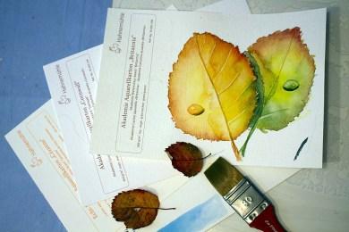 Verschiedene Aquarellpapiere bringen beim Herbstlaub unterschiedliche Ergebnisse (c) FRank Koebsch