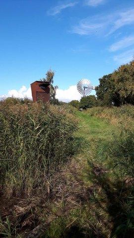 Wasserläufe auf den Wiesen bei Lobbe (c) Frank Koebsch (3)
