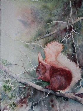 Eichhörnchen (c) Aquarell von Hanka Koebsch