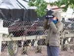 Kranichbeobachtungen auf der Malreise in den Müritz Nationalpark (c) FRank Koebsch (5)
