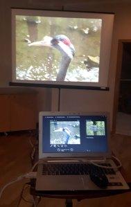 Multivisionshow Faszination Kraniche (c) FRank Koebsch (3)