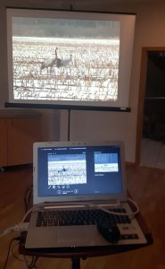 Multivisionshow Faszination Kraniche (c) FRank Koebsch (4)