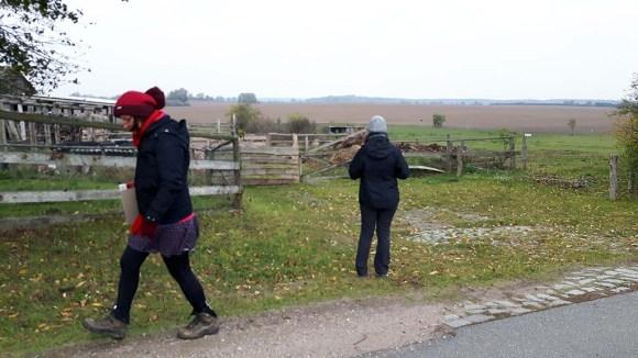 Wir beobachten Kraniche auf den Feldern an der Müritz (c) FRank Koebsch (2)