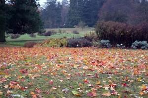 Bunte Herbstblätter im Botanischen Garten Rostock (c) Frank Koebsch (2)