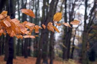 Herbst im Botanischen Garten Rostock (c) Frank Koebsch