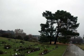 kalter nasser Herbst im Botanischen Garten Rostock (c) Frank Koebsch