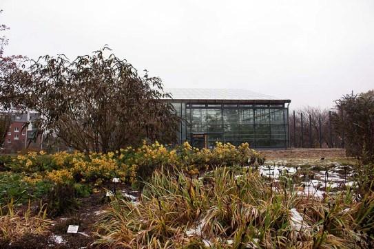 Tropenhaus der Loki-Schmidt-Gewächshäuser im Botanischen Garten Rostock (c) FRank Koebsch (2)