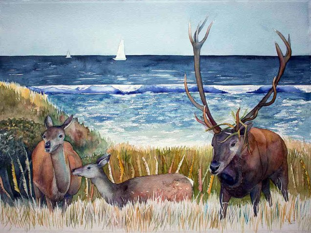 Hirschbrunft an der Ostsee (c) Aquarell von FRank Koebsch